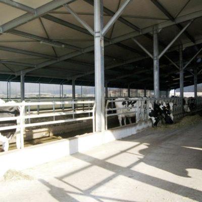 Stalla per bovini Brescia, Agroservice